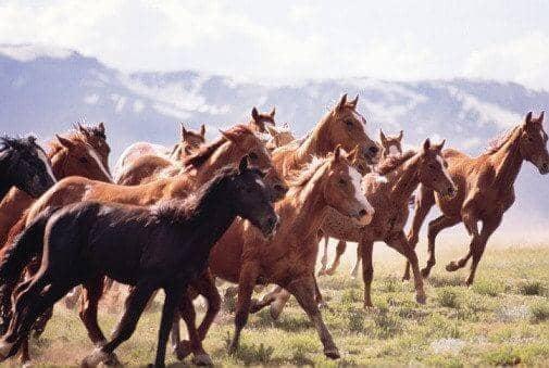 sen o koniach